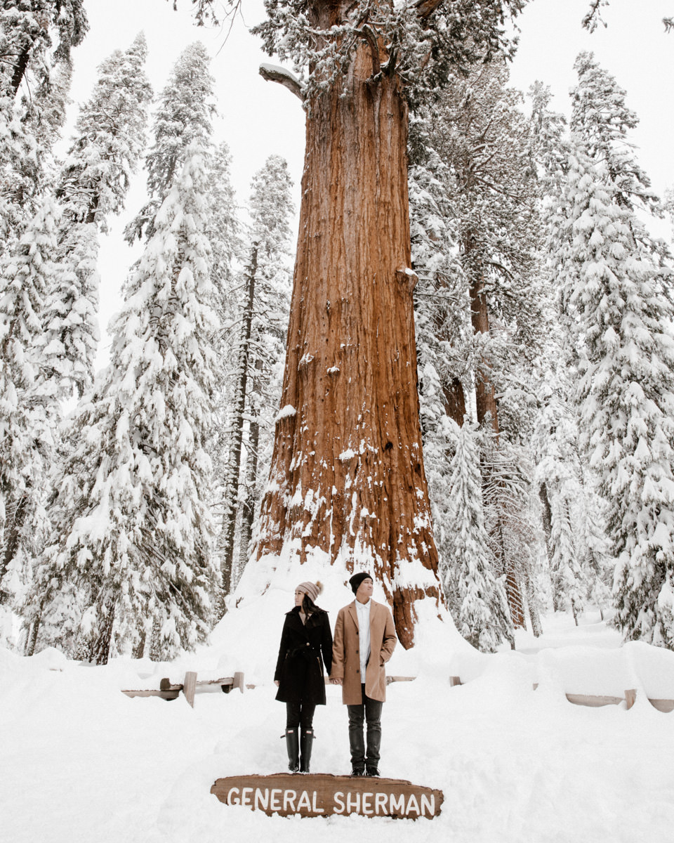 5 reasons why you should have engagement photos sequoia national park