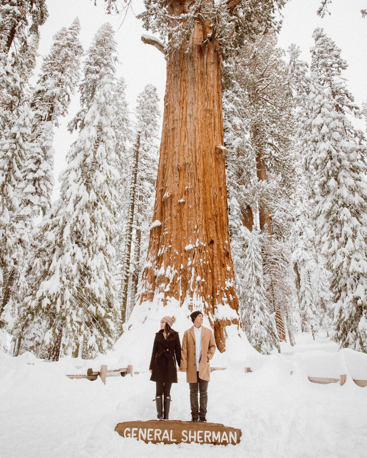 sequoia national park engagement session general sherman